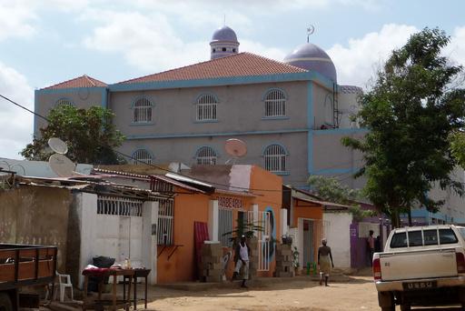 黄熱、アンゴラで30年ぶりに流行 51人死亡