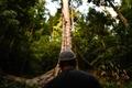 75メートルの樹上で採取、マレーシアの貴重な「トアランハニー」