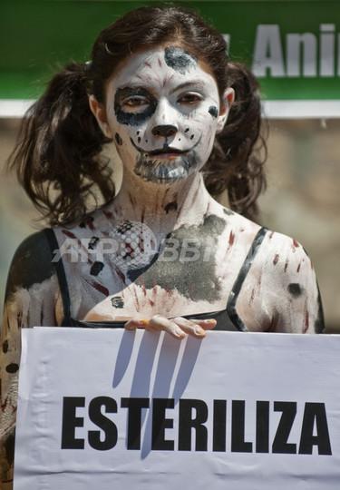 動物保護団体「アニマ・ナチュラリス」、野良犬の感電処分に抗議 メキシコ