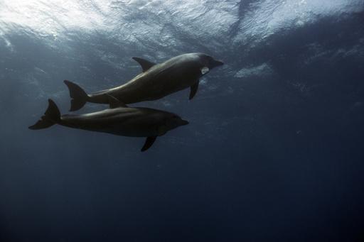 カナダ議会、イルカやクジラの捕獲・繁殖禁止する法案可決