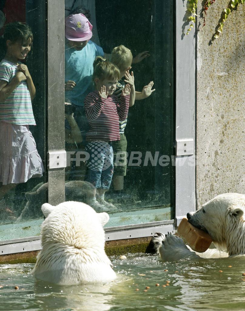 ホッキョクグマに襲われ女性重傷、ベルリン動物園