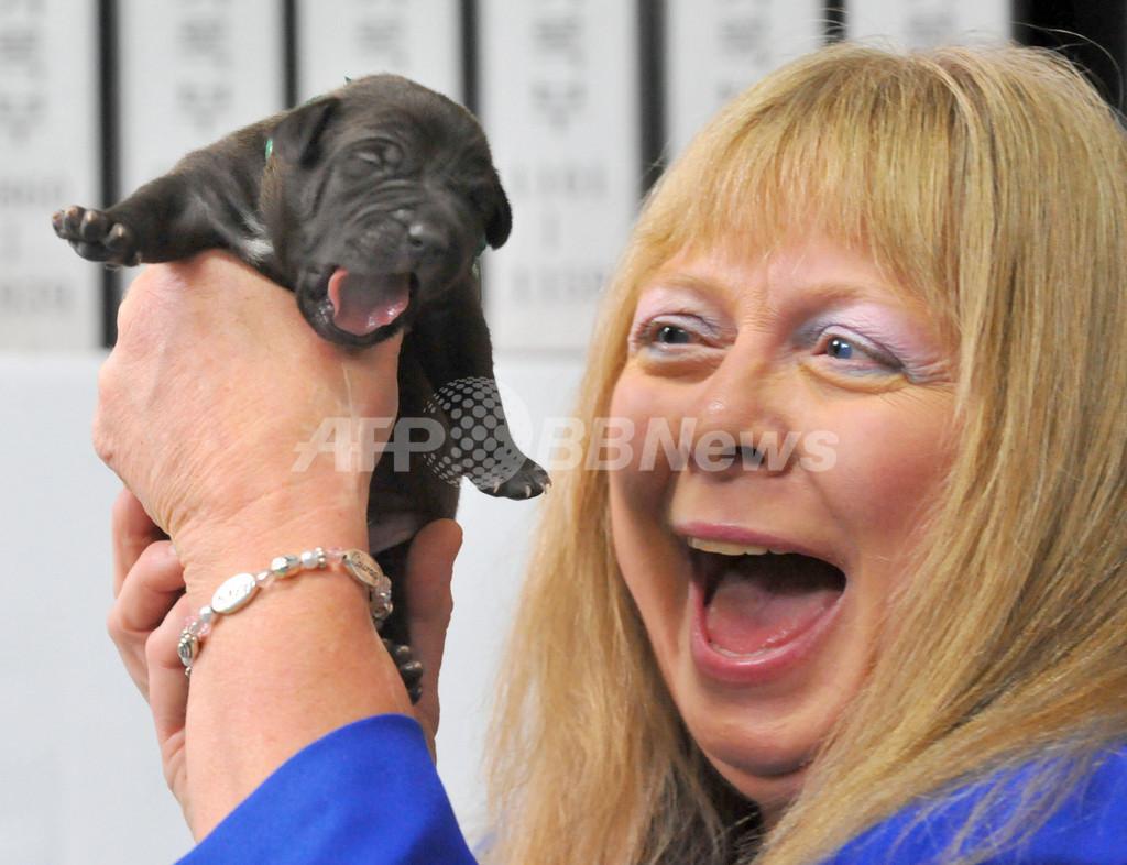 韓国でペット犬のクローン5匹が誕生、商業ベース初