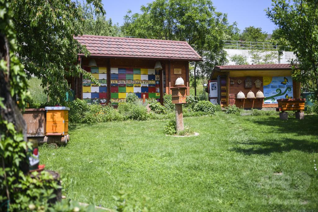 5月20日は「ワールド・ビー・デー」 国連がミツバチの保護を訴え
