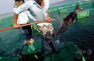 連続48時間労働も…台湾で外国人漁師が「海の奴隷労働」