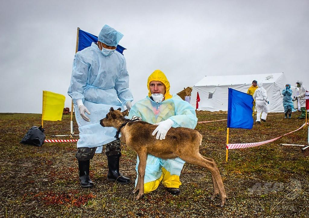 解ける永久凍土と目覚める病原体、ロシア北部の炭疽集団発生
