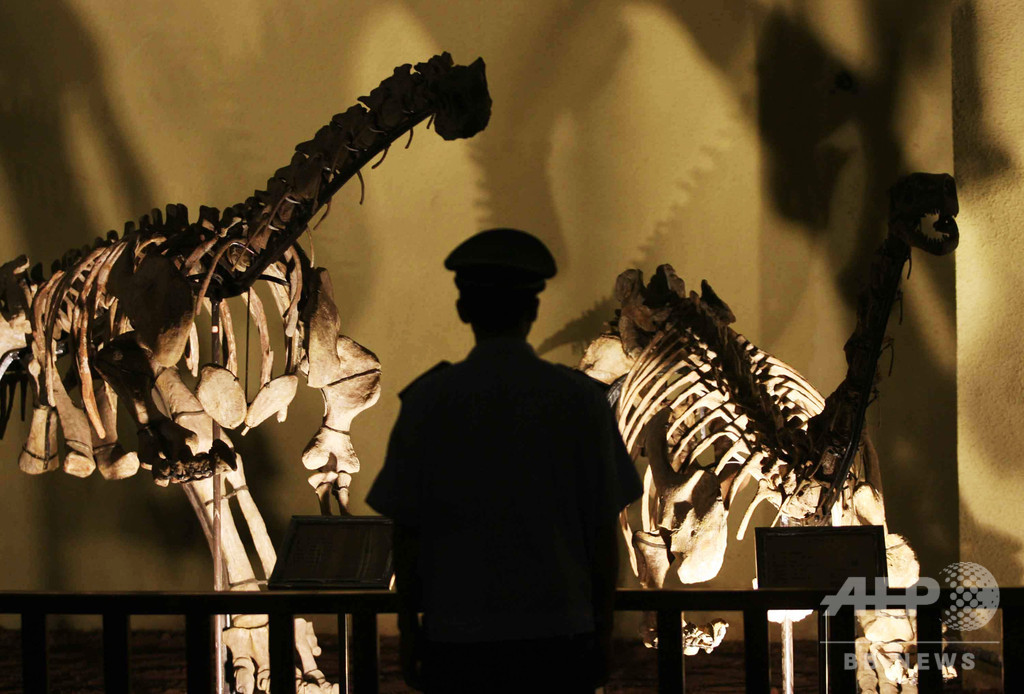 恐竜と張り合う大型ディキノドン類の化石発見、哺乳類の「親類」