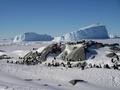 南極のペンギンの個体数、これまでの推測の2倍 研究