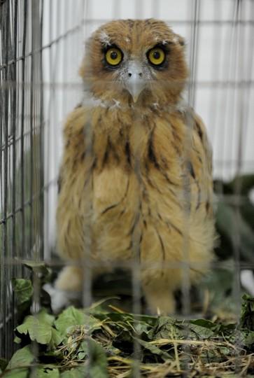 希少動物多数を保護、フィリピンの空港で押収