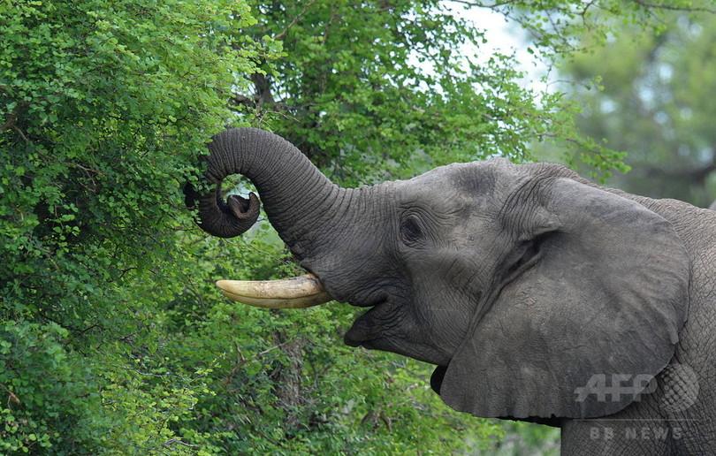 最も嗅覚が優れた動物はゾウ?東大研究