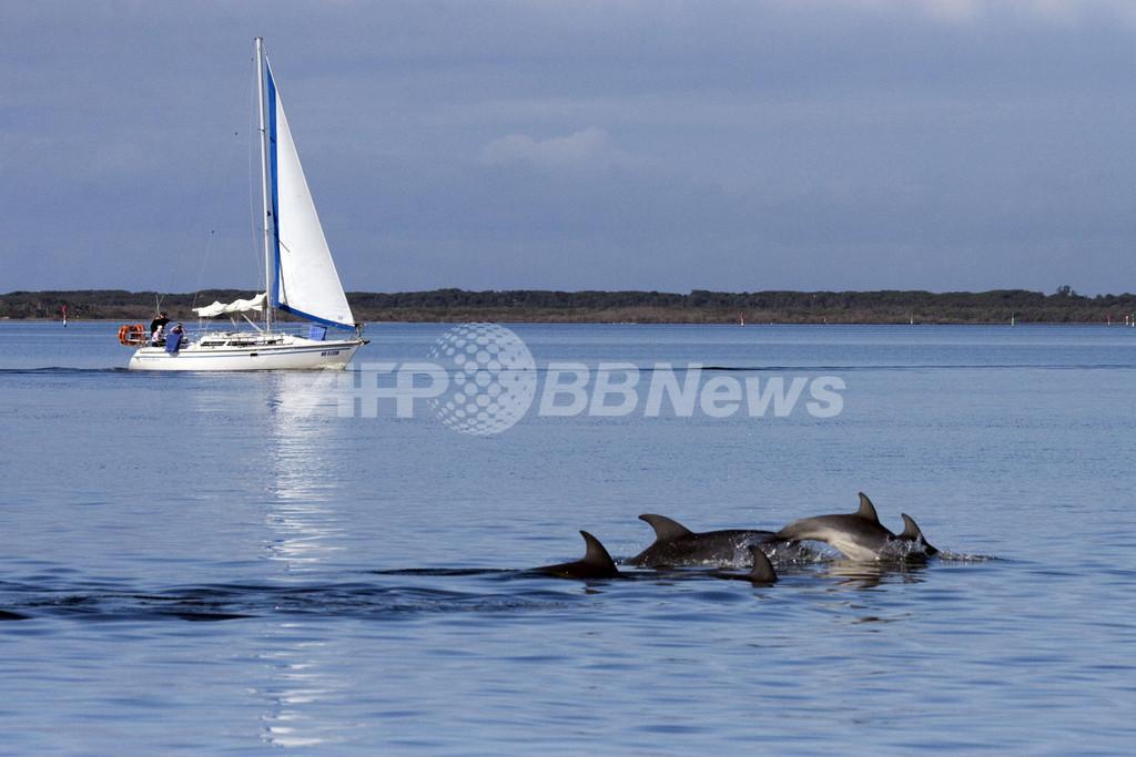 オーストラリア南沖で新種のイルカ確認