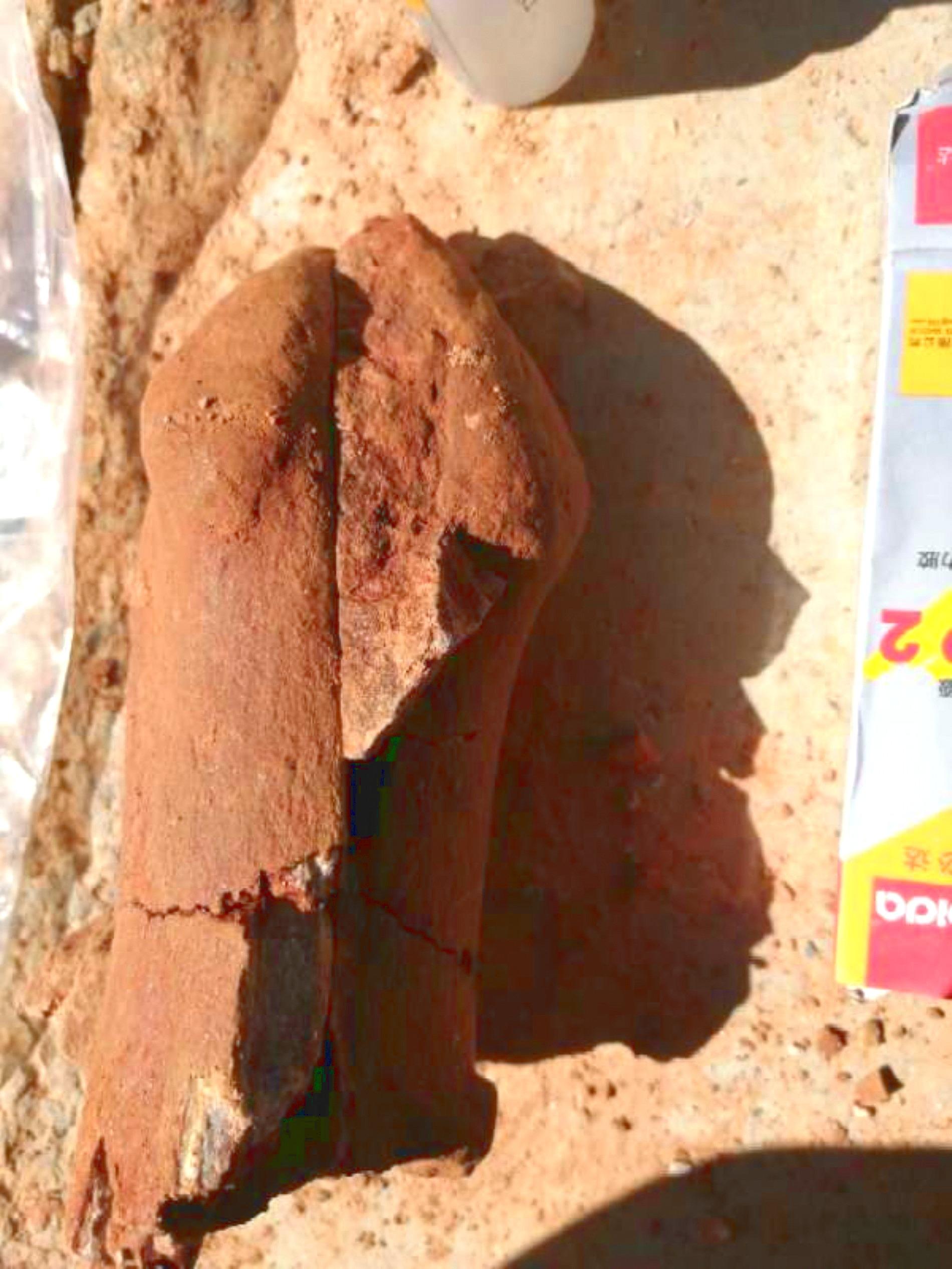 青海チベット高原で2500万年前の動物化石を発見