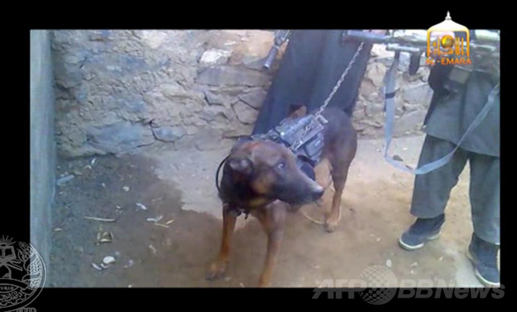 タリバンが軍用犬を「捕虜」に、アフガニスタン