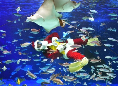 魚たちと戯れるサンタ、水族館でクリスマスショー 東京