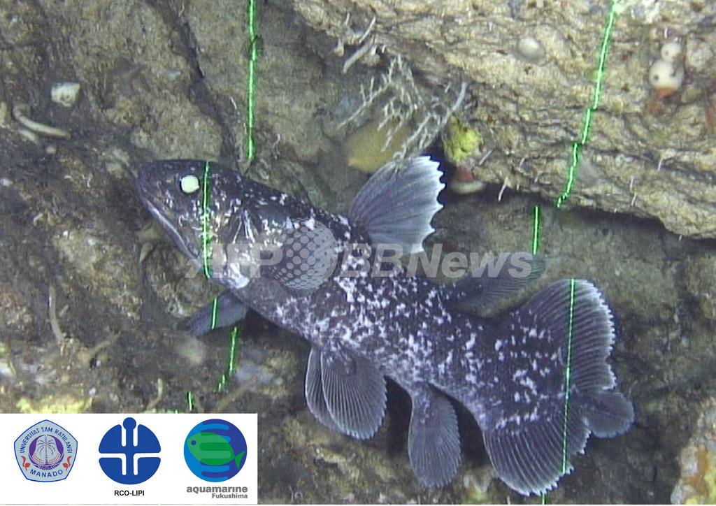 シーラカンス稚魚の撮影に成功、福島県水族館の調査隊