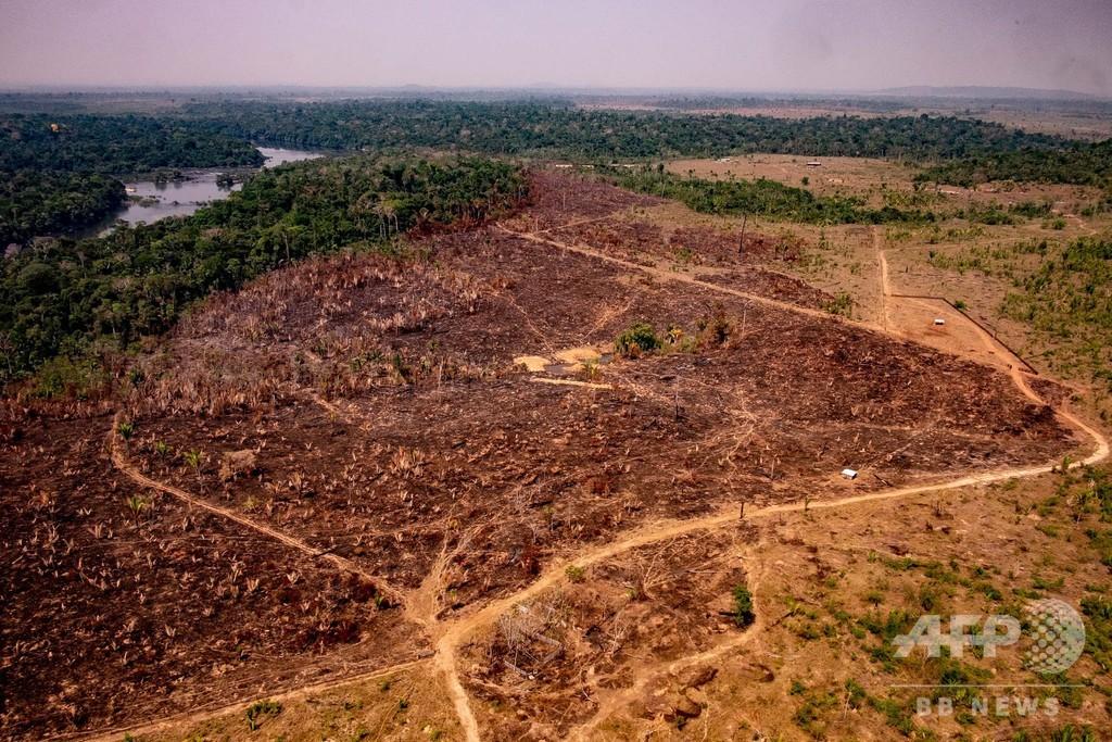 ブラジルのアマゾン、伐採面積が大幅に増加 人工衛星データ