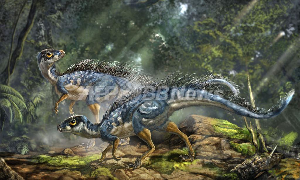 「始祖鳥」よりも古い羽毛に覆われた化石、中国で発見