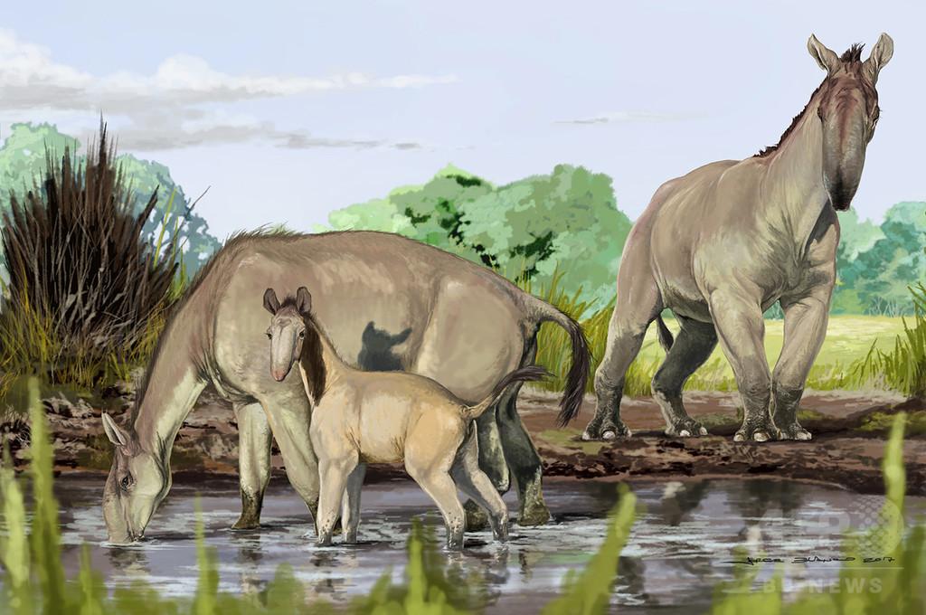 ダーウィンが「最も奇妙」と呼んだ動物、系統進化を解明か