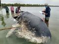 死んだクジラの胃から6キロのプラスチックごみ インドネシア
