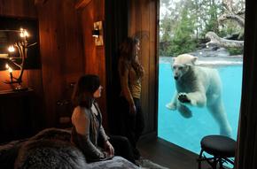 ホッキョクグマと一晩を過ごす宿泊プラン、仏動物園