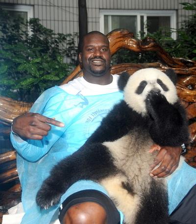 【写真特集】愛くるしい世界のパンダ AFP収蔵写真から厳選