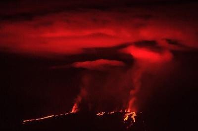 ガラパゴス諸島の噴火が収束へ、希少動物への影響免れる