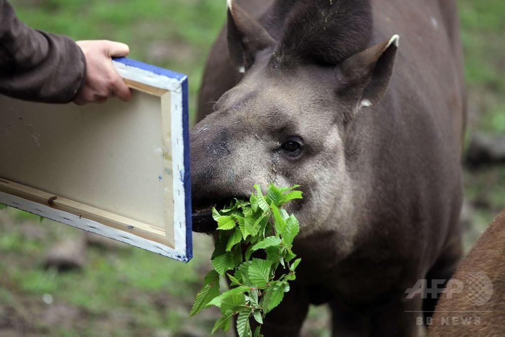鼻で絵を描くバク、仏動物園