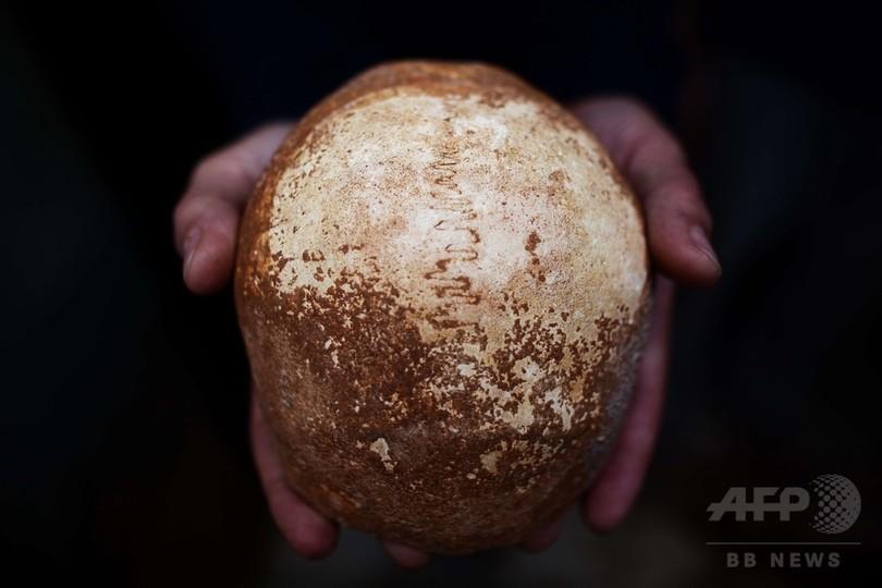 中東で発見の現生人類の頭蓋骨、人類大移動解明の手掛かりに