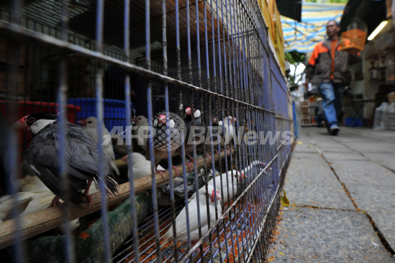 鳥インフルエンザで男性が死亡、中国