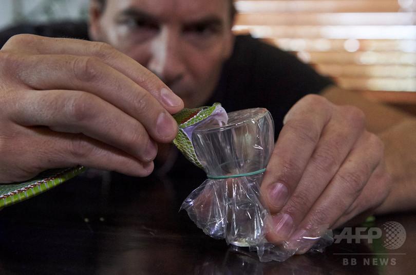 ヘビ毒を注射する男、新たな解毒剤開発の希望に