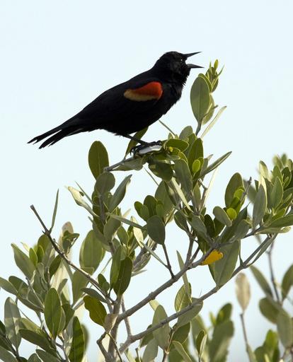 北米の鳥の個体数、約50年で29%減少 30億羽に相当 研究