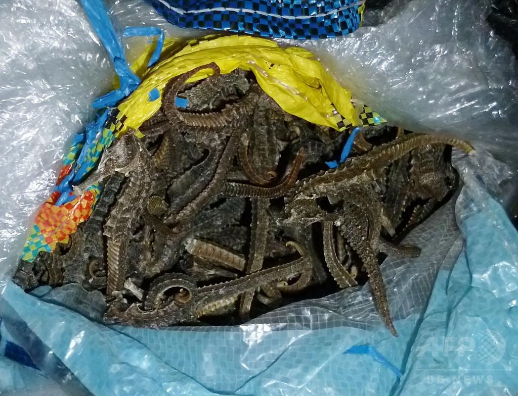中国の密輸船から800万匹のタツノオトシゴを押収、ペルー