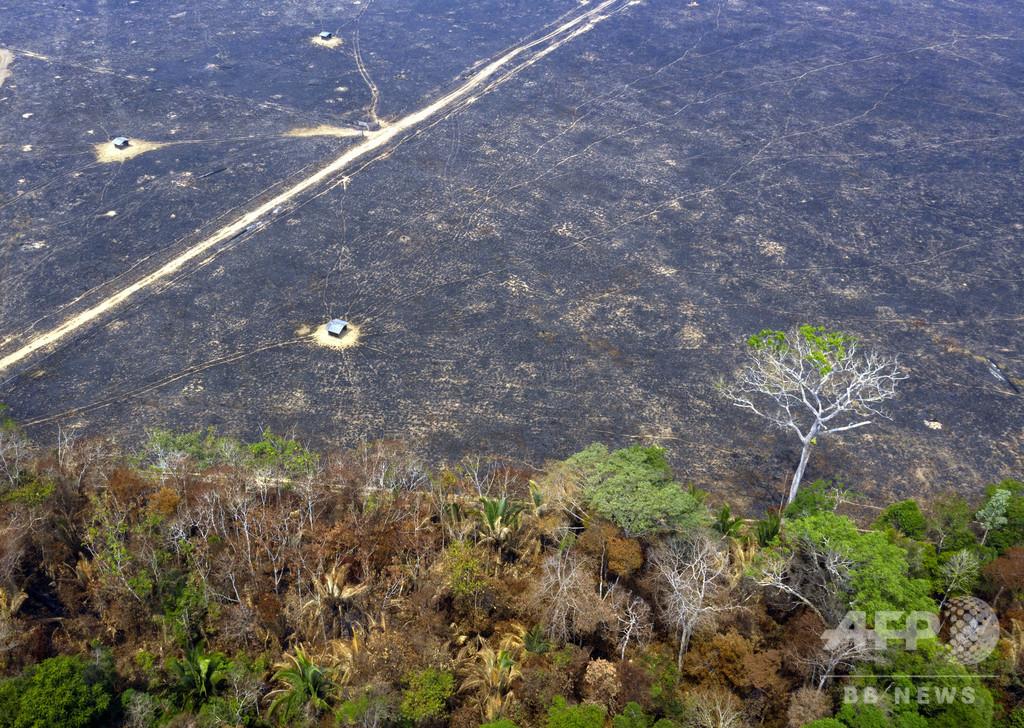 森林破壊面積、前年比85%拡大 ブラジルのアマゾン熱帯雨林