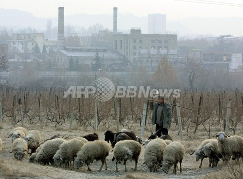 ヒツジ600匹と羊飼いが蒸発のミステリー、グルジア