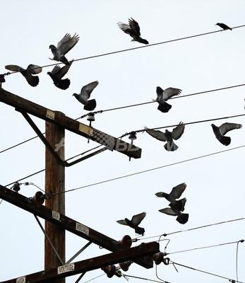 初期鳥類は「4つの翼で飛行」、中国チームが論文発表