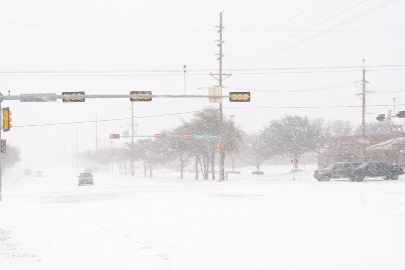 吹雪で牛1万5000頭死ぬ 米テキサス州