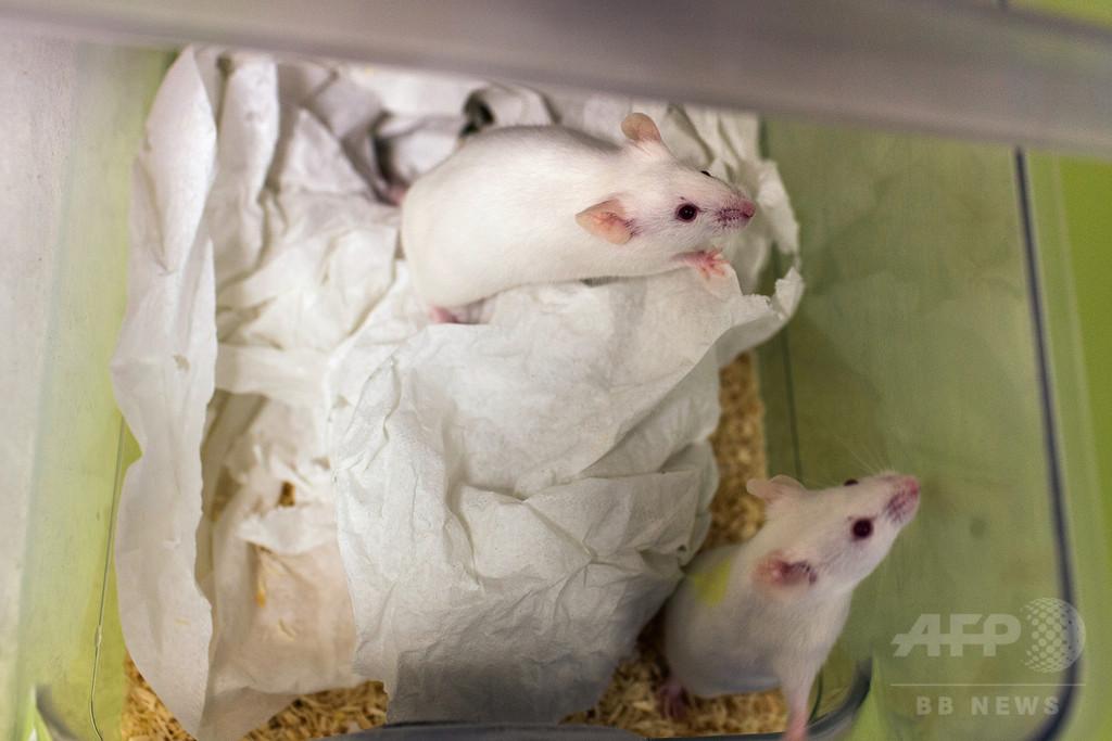 損傷した生体組織を再生する実験薬、マウスで効果 米研究