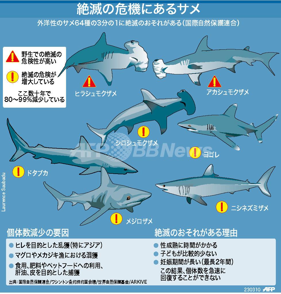 【図解】絶滅のおそれのあるサメ類