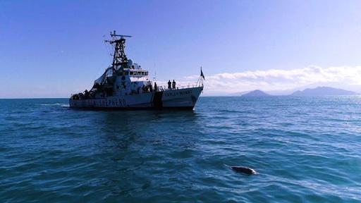 動画:世界に残り20頭? 希少イルカ、また漁網に掛かり死ぬ メキシコ沖