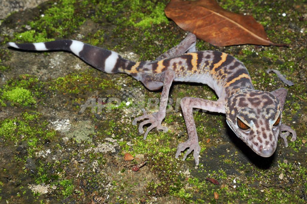 大メコン圏で見つかった新種163種、すべて絶滅の危機に WWF