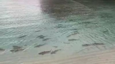 動画:映画『ザ・ビーチ』の浜辺、閉鎖から半年で多数のサメ戻る