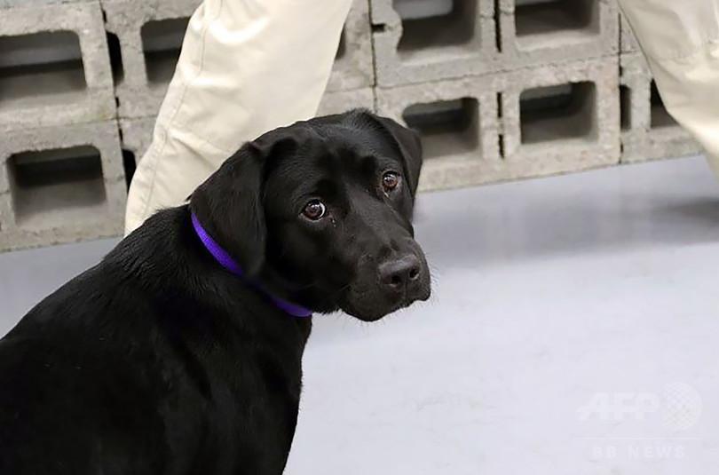 CIAで訓練中の爆発物探知犬候補、仕事に興味示さずクビに