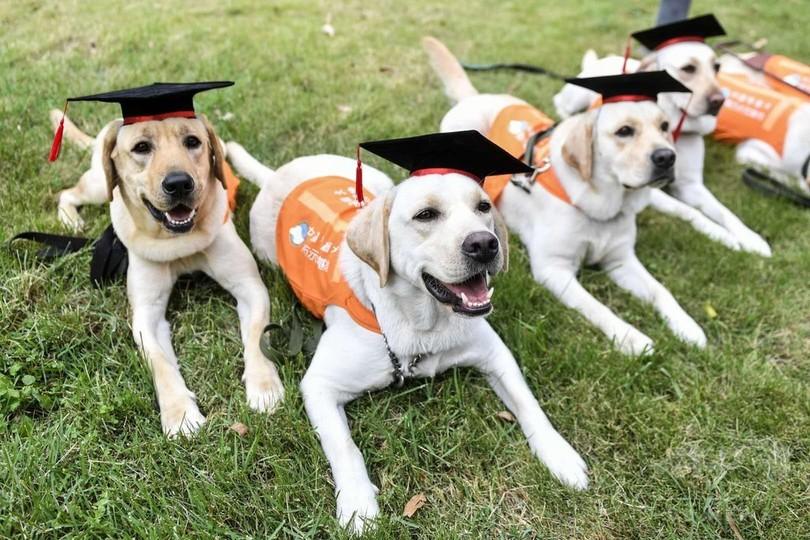 ボクたちも早くお役に立ちたい! 中国盲導犬南方師範基地から初の「卒業生」