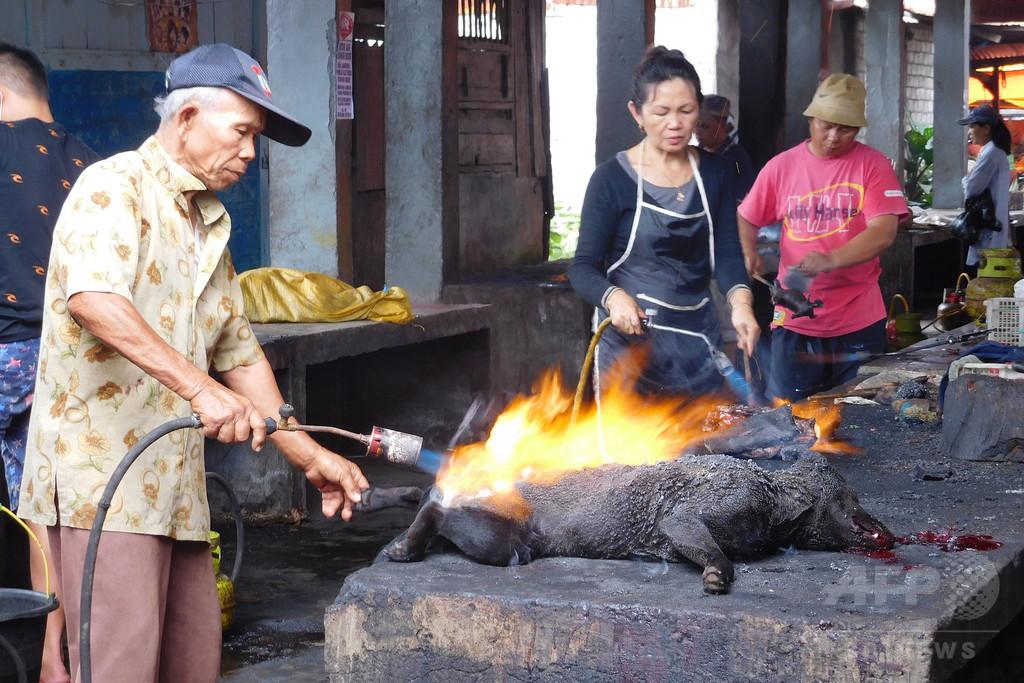 路上で犬を撲殺、バーナーで丸焼きに インドネシア市場の動画が物議