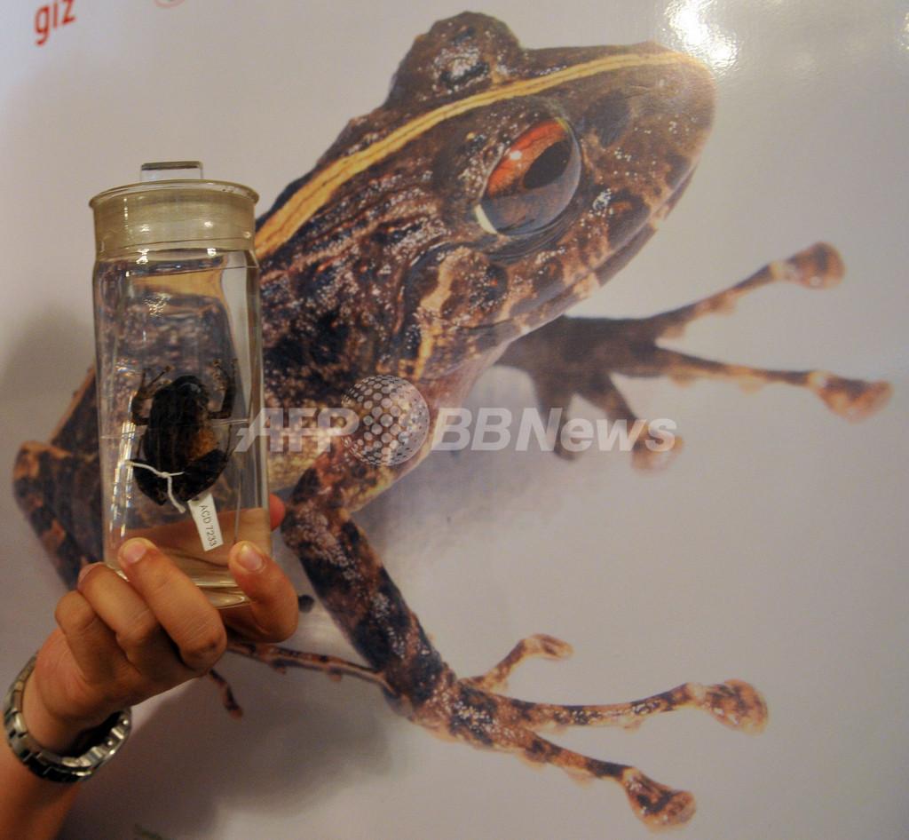 カエルの新種2種を発見、フィリピン