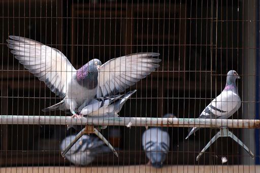 香港、H7N9型鳥インフルで初の死者 80歳男性