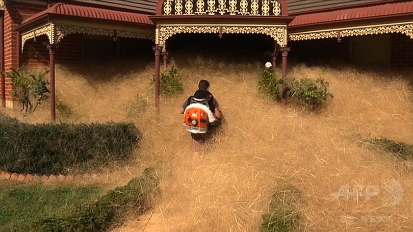 豪の町で「ヘアリーパニック」大発生、雑草が住宅覆う