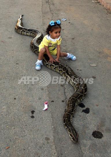パレスチナのヘビ好き一家、2歳の娘もポニー代わりに
