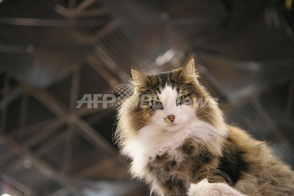 「ネコが爆発する!」 ロシアの女性が通報