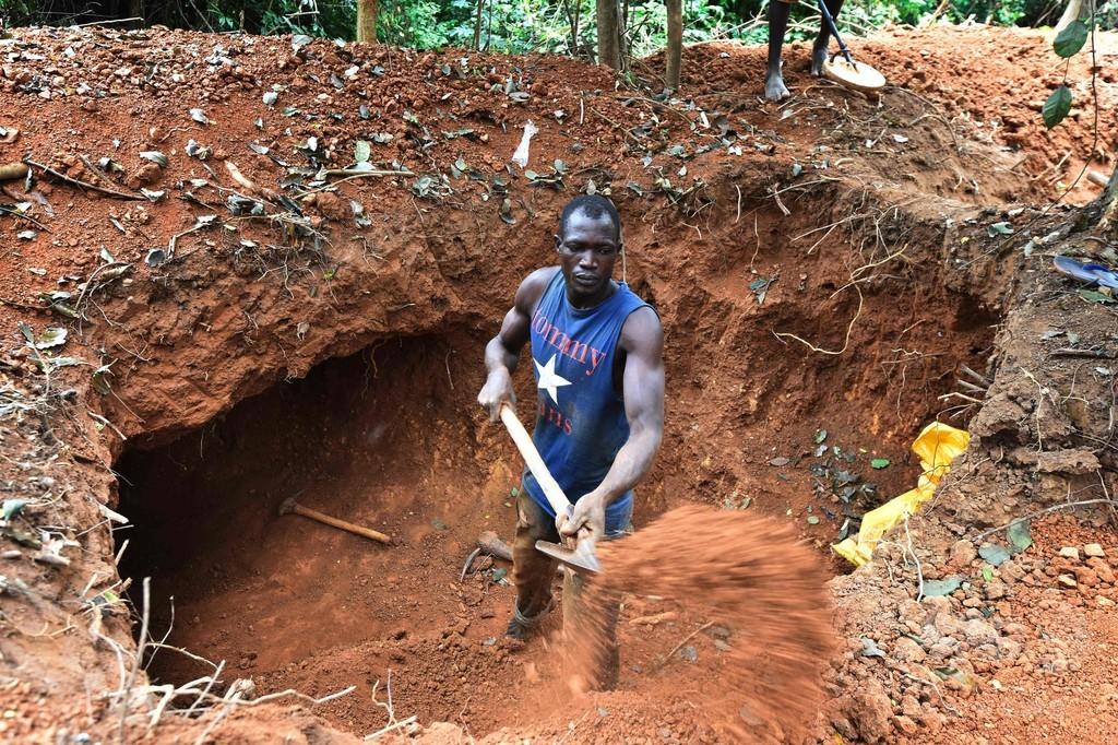元カカオ生産者が押し寄せる違法な金鉱山、コートジボワール