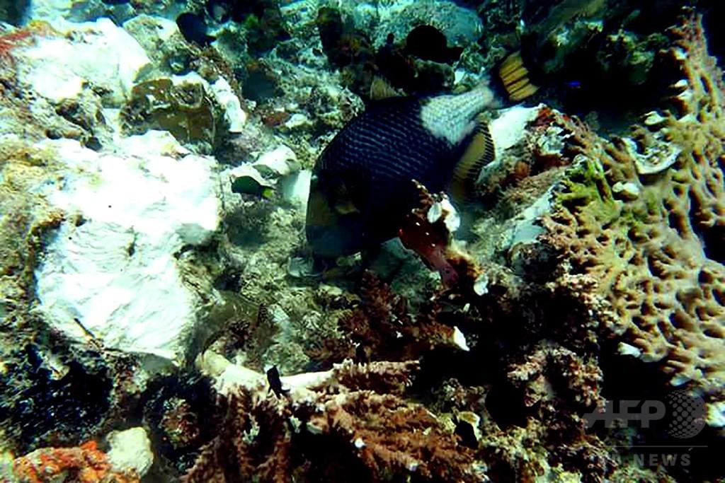 英クルーズ船の衝突でサンゴ礁に大きな被害 インドネシア